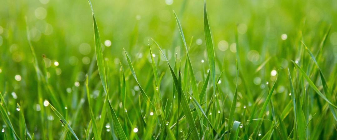 Close-up shot of grass